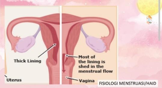 proses menstruasi